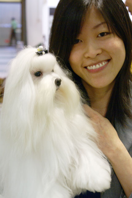 Ms Annie Goh With Her Champion Maltese