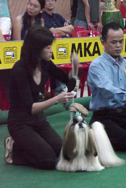 Ms Annie Goh leading with her Champion Shih Tzu at MKA show