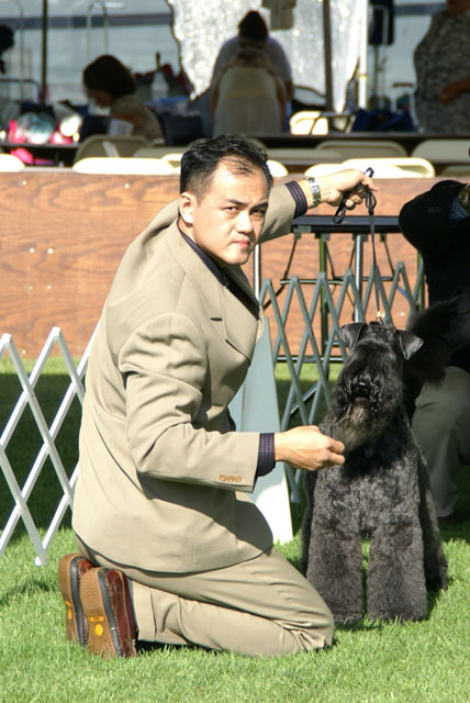Mr. Gan Wee Yet Showing An American Top Kerry Blue Terrier At Great Western Dog Show, USA