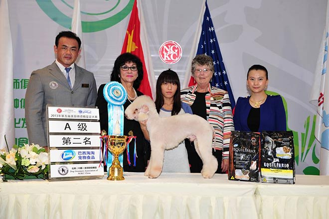 September 2013 NGKC Beijing Grooming Competition And Certification