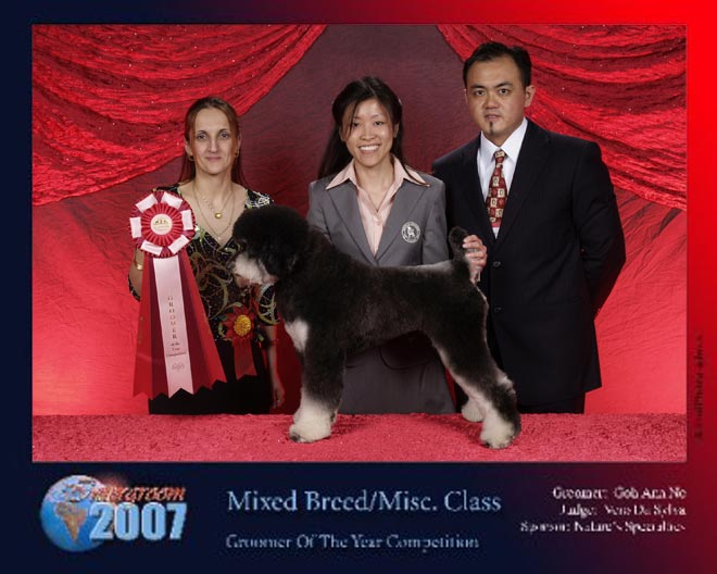 Intergroom 2007. Mixed Breed/Misc Class. Groomer Of The Year Competition..